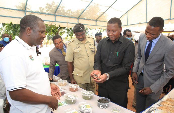 Changamoto za wakulima ni kutotumia mbegu bora,nafasi kati ya mmea na mmea,matumizi sahihi ya mbolea na matumizi hafifu ya viuatilifu.
